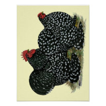 Cochin Mottled Chickens Poster