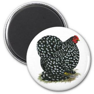 Cochin Mottled Hen Fridge Magnets