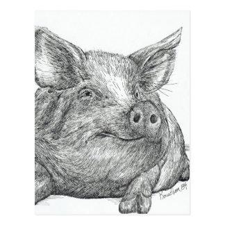 Cochinillo del cerdo postales