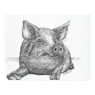 Cochinillo del cerdo tarjetas postales