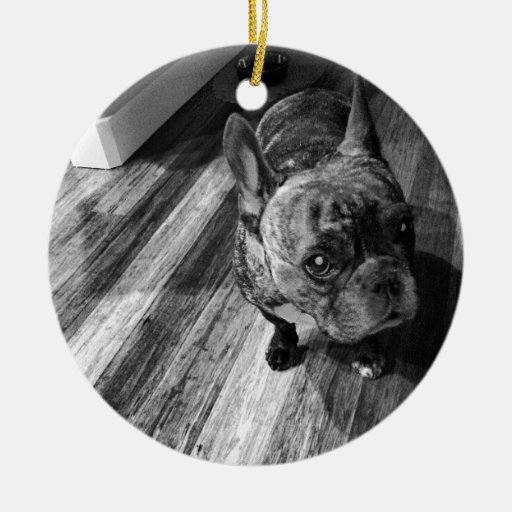 ¡Cochinillo:) #dog#piglet#love#perra#cutie! Adorno Redondo De Cerámica