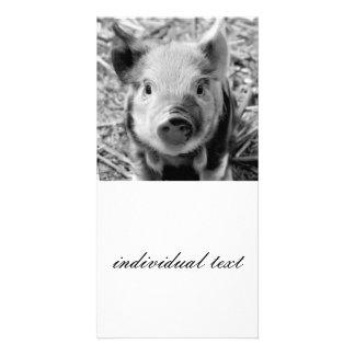 cochinillo dulce, blanco negro tarjetas fotograficas
