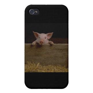 Cochinillo lindo iPhone 4 protectores