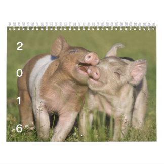 Cochinillos felices - calendario 2016 del cerdo