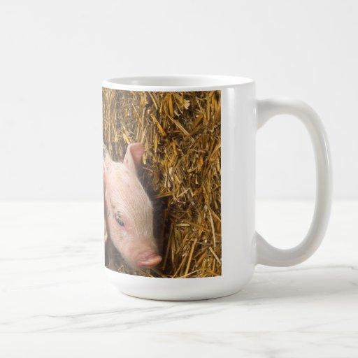 Cochinillos Taza De Café