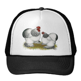 Cochins:  Columbian Bantams Mesh Hat