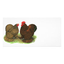 Cochins:  Golden-laced Card