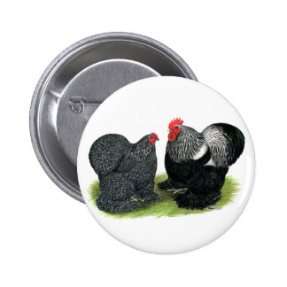Cochins:  Silver-penciled Button