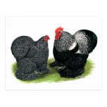 Cochins:  Silver-penciled Postcards