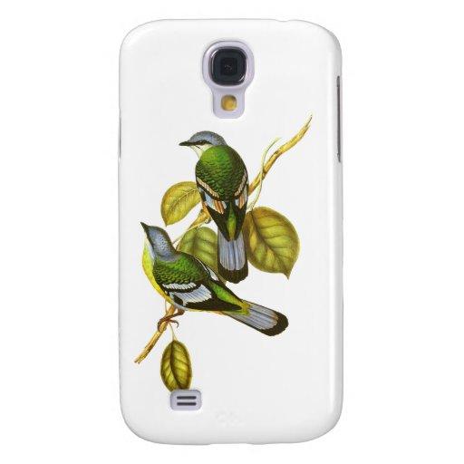 Cochoa verde