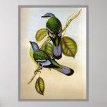 Cochoa verde impresiones