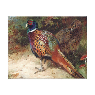 Cock And Hen Pheasant Canvas Print