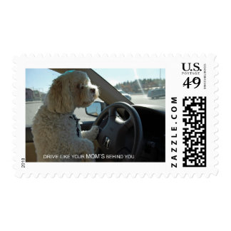 Cockapoo At The Wheel Postage