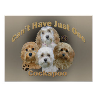Cockapoo Can't Have Just One Poster