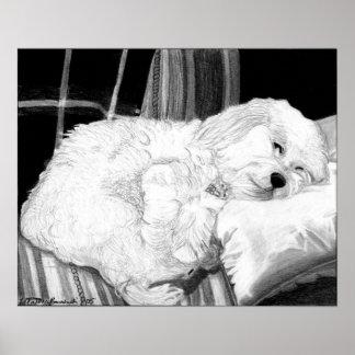 Cockapoo Dog Portrait Poster Print