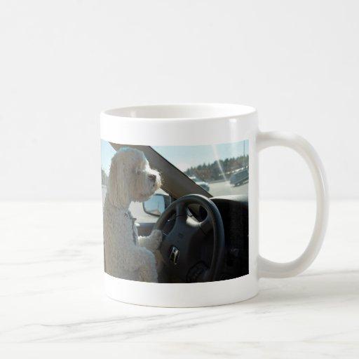 Cockapoo en la rueda tazas