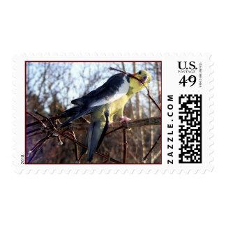 Cockatiel 1 Stamps