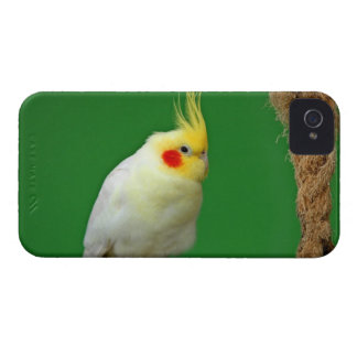 Cockatiel bird beautiful blackberry bold case