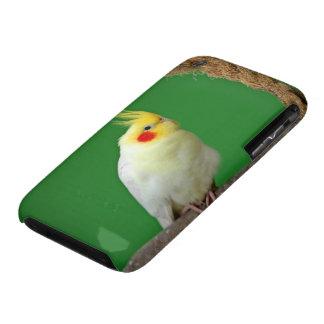 Cockatiel bird beautiful iphone 3G case mat barely