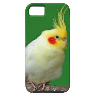 Cockatiel bird beautiful iphone 5 case mate tough