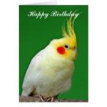 Cockatiel bird beautiful photo birthday card