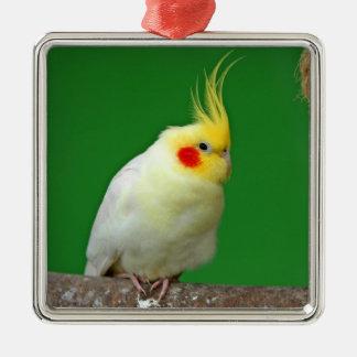 Cockatiel bird beautiful photo hanging ornament