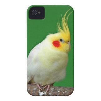 Cockatiel bird beautiful photo iphone 4 case mate
