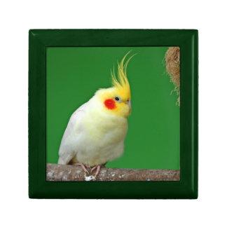 Cockatiel bird beautiful photo jewelry box