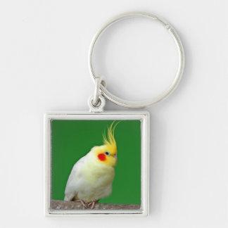 Cockatiel bird beautiful photo keyring, keychain