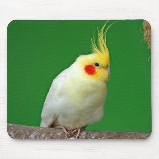Cockatiel bird beautiful photo mousepad