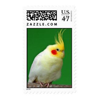 Cockatiel bird beautiful photo postage stamp