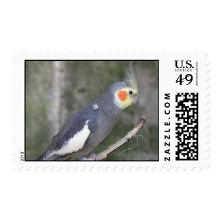 Cockatiel Bird Postage