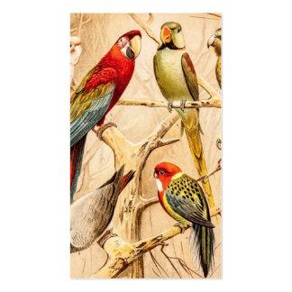 Cockatiel del Parakeet de Conure del Cockatoo del  Tarjetas De Visita