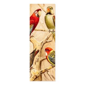 Cockatiel del Parakeet de Conure del Cockatoo del  Plantillas De Tarjetas De Visita