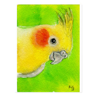 Cockatiel del peekaboo tarjetas postales