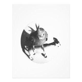 Cockatiel en círculo del bw de la cabra tarjetón
