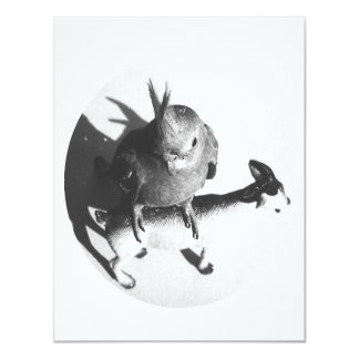Cockatiel en círculo del bw de la cabra comunicados personalizados