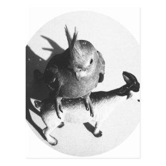 Cockatiel en círculo del bw de la cabra tarjetas postales