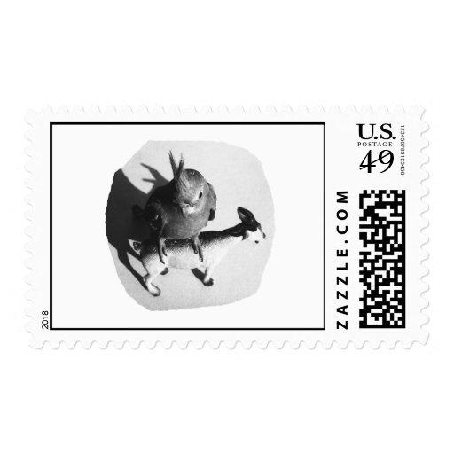 Cockatiel en imagen blanco y negro de la cabra de
