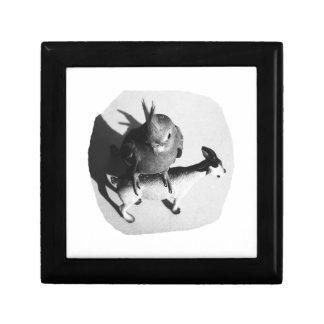 Cockatiel en imagen blanco y negro de la cabra de caja de regalo