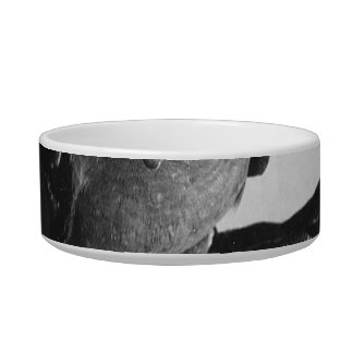 Cockatiel en imagen blanco y negro de la cabra de  boles para gatos