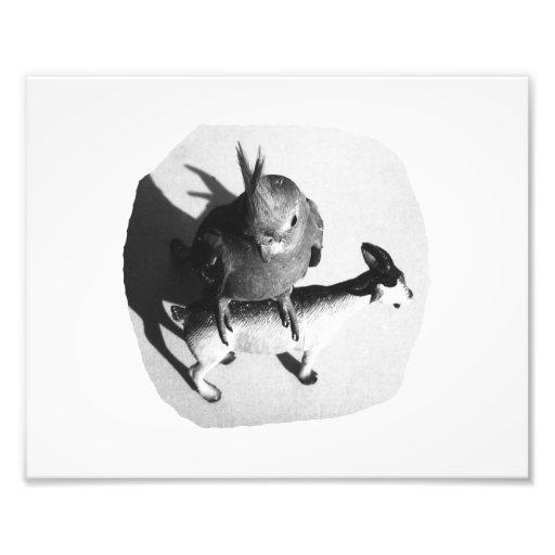 Cockatiel en imagen blanco y negro de la cabra de  arte fotografico