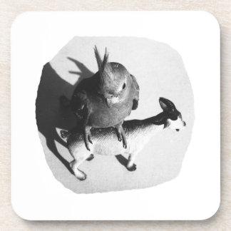 Cockatiel en imagen blanco y negro de la cabra de posavasos