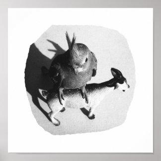 Cockatiel en imagen blanco y negro de la cabra de  póster