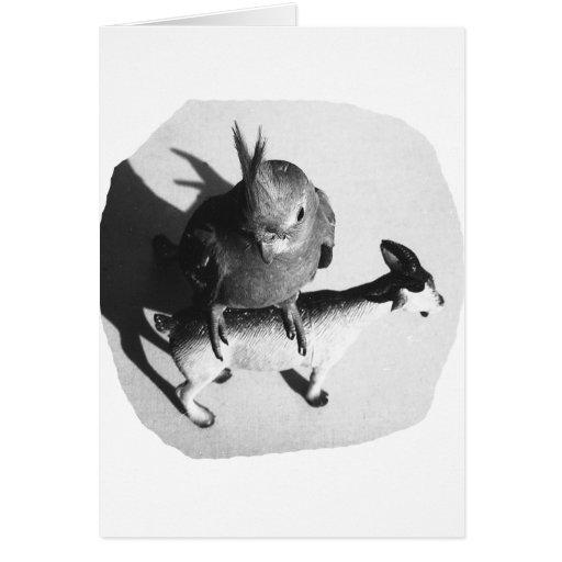 Cockatiel en imagen blanco y negro de la cabra de  tarjeta