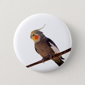 Cockatiel Gray and Yellow Pet Bird Photograph Pinback Button