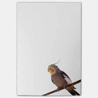 Cockatiel Gray and Yellow Pet Bird Photograph Post-it® Notes