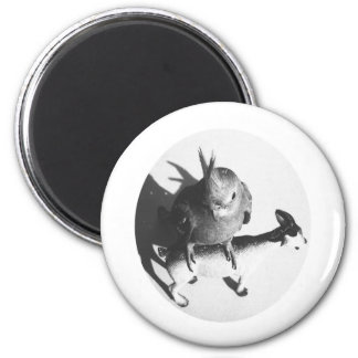Cockatiel on goat bw circle 2 inch round magnet