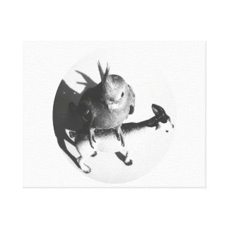 Cockatiel on goat bw circle stretched canvas prints