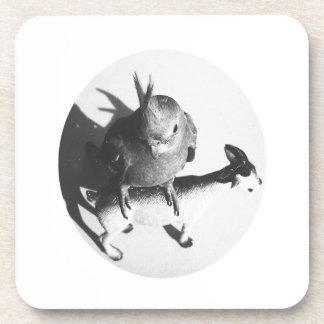 Cockatiel on goat bw circle coasters